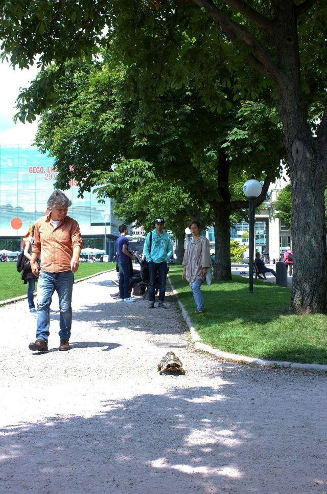 Spaziergang mit Schildkroete_flanerie_3